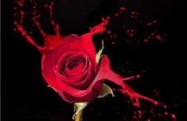 Fleur de sang : un amour d'été