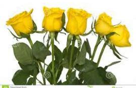 Cinq roses jaunes pestilentielles pour un été moins que parfait