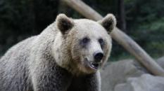 """Lire gratuitement le roman """"Canelle l'ourse des Pyrénées"""" de The Gonzo Man"""