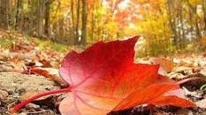 La bise réchauffe le tapis des feuilles mortes