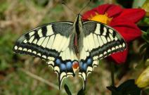 Depuis, mes balades dans la campagne sont souvent accompagnées d'un papillon qui suit mes petits pas.