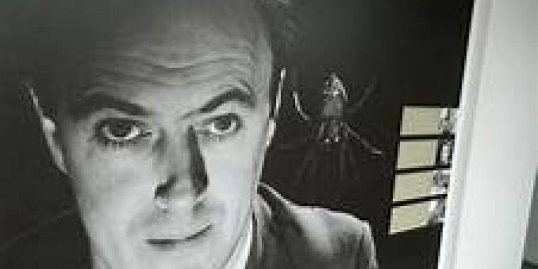 """""""J'entends les petites fourmis qui bavardouillent quand elles trottent sur le sol."""" ― Roald Dahl"""