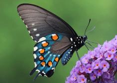 """Lire gratuitement le roman sff """"Elora et le papillon qui rêvait de redevenir chenille"""" de cheyennecesar"""